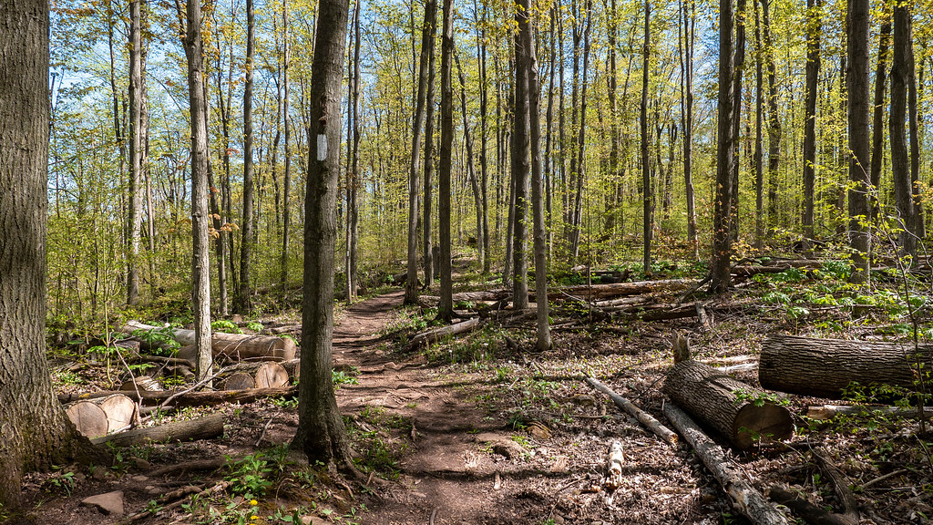 The Bruce Trail at Silver Creek Conservation Area