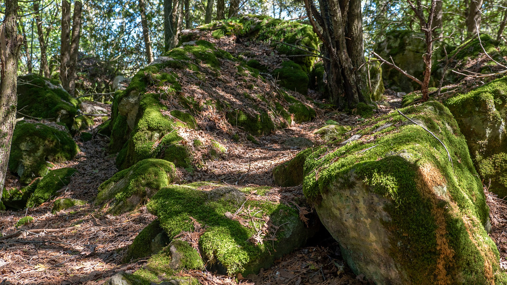 Mossy rocks at Silver Creek Conservation Area
