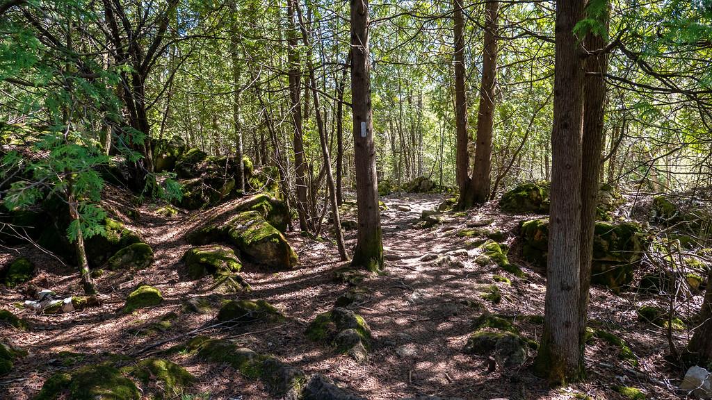 Rocks dotting the Bruce Trail