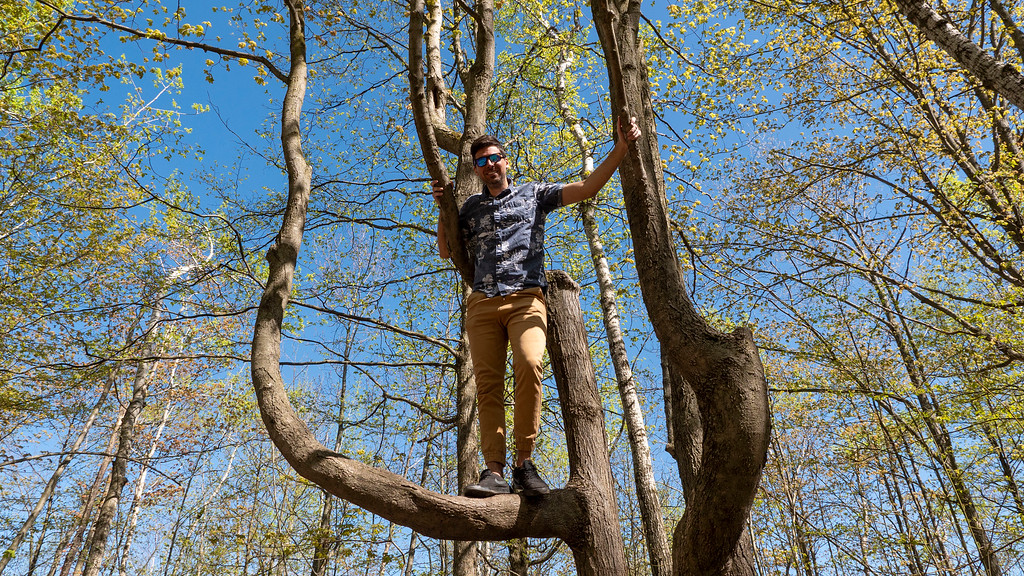 Climbing trees on the Bruce Trail