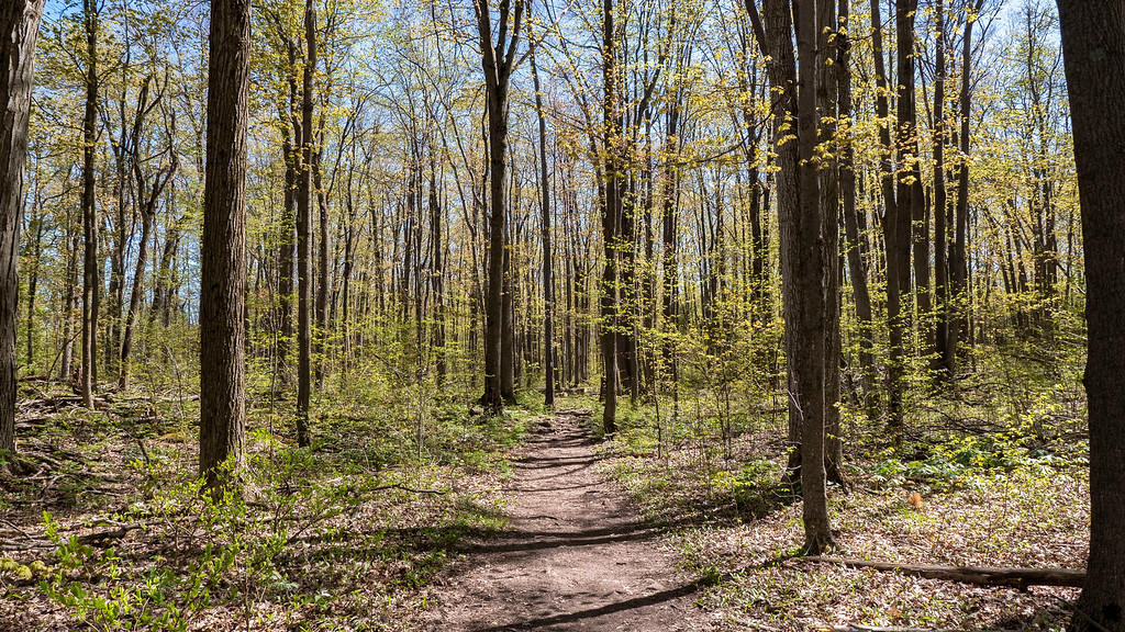 Credit Valley Conservation Hikes