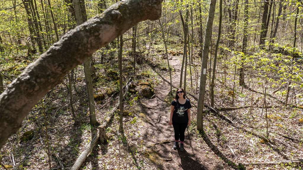 Up in the trees on the Bruce Trail
