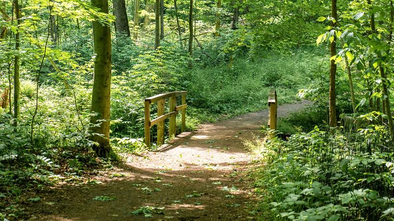 Springwater Conservation Area hiking trails