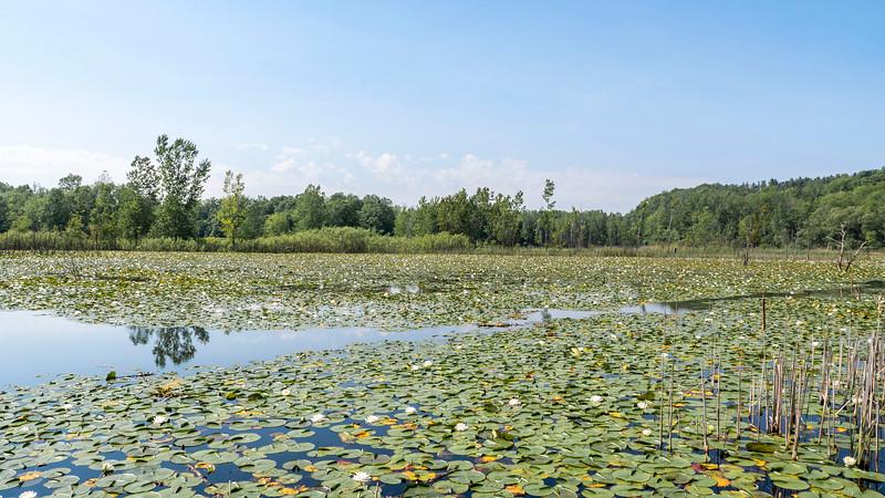 Herb Kebbel Wetland