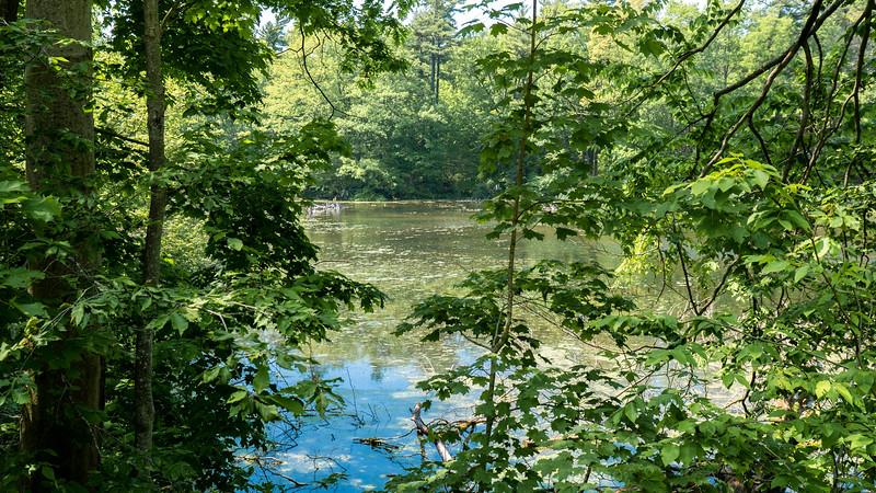 Springwater Pond