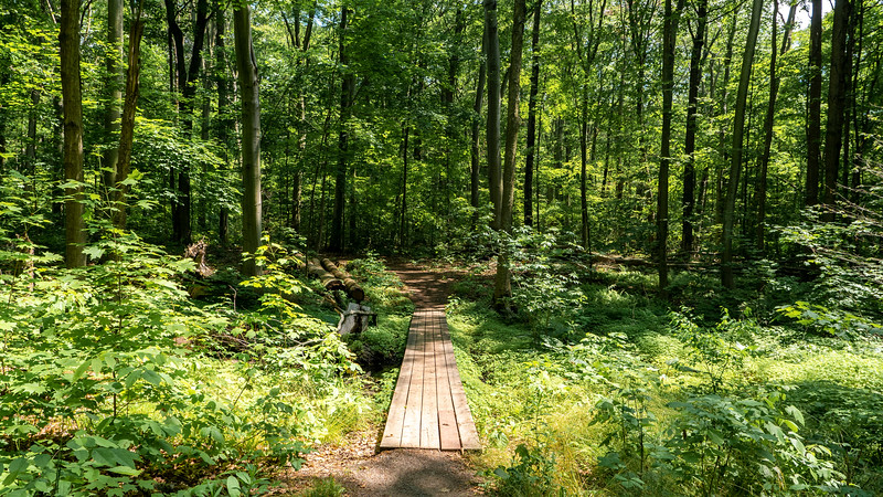 Boardwalk path at Springwater Conservation Area