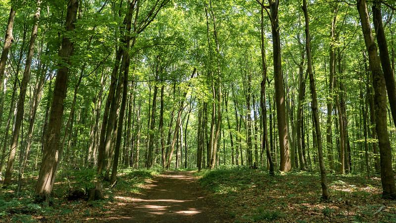 Elgin County hiking trails