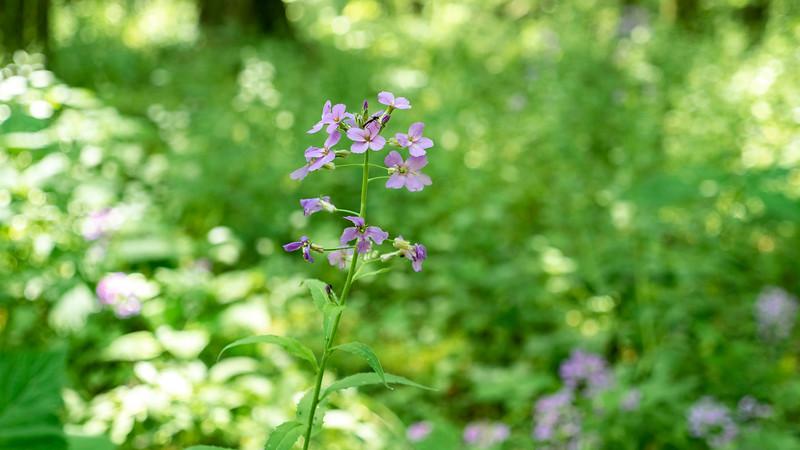 Wildflowers in Alymer Ontario