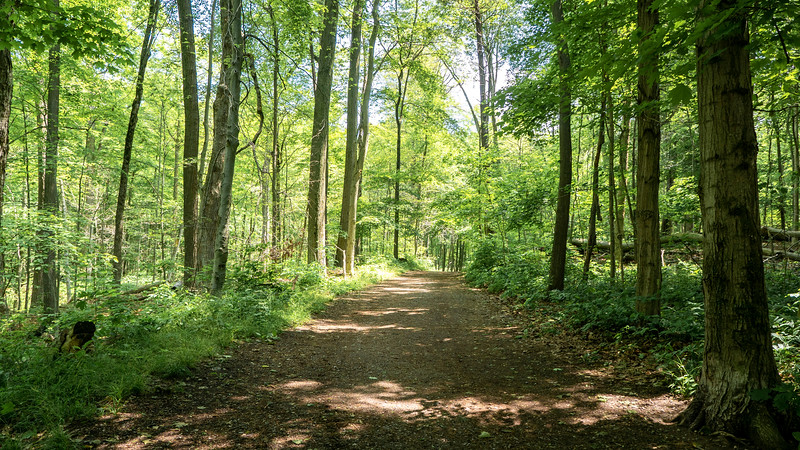 Springwater Forest Main Trail