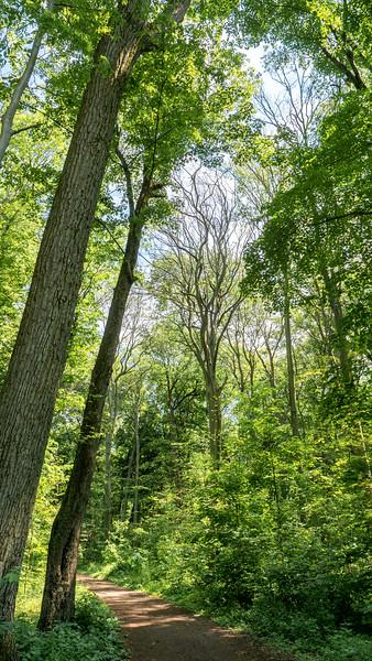 Springwater Forest in Alymer Ontario