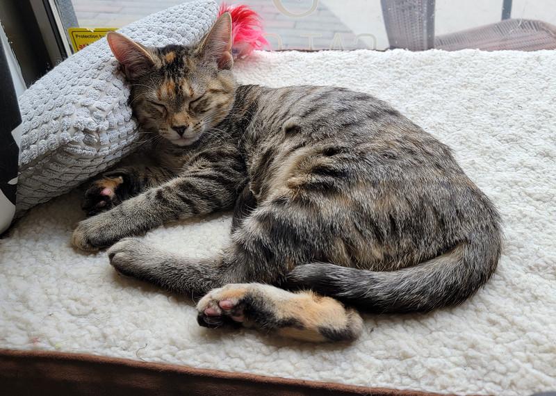Alley Cat Cafe Stratford Ontario