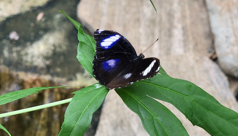 Science North Butterfly Exhibit
