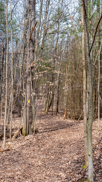 Jokers Hill Yellow Trail