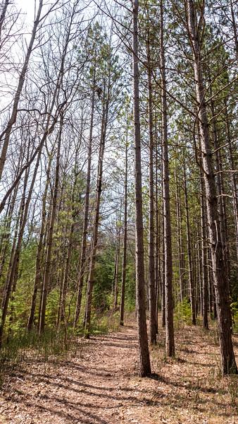 Thornton Bales Conservation Area