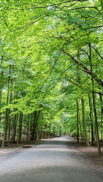 Moore Park Ravine - The Beltline Trail Toronto