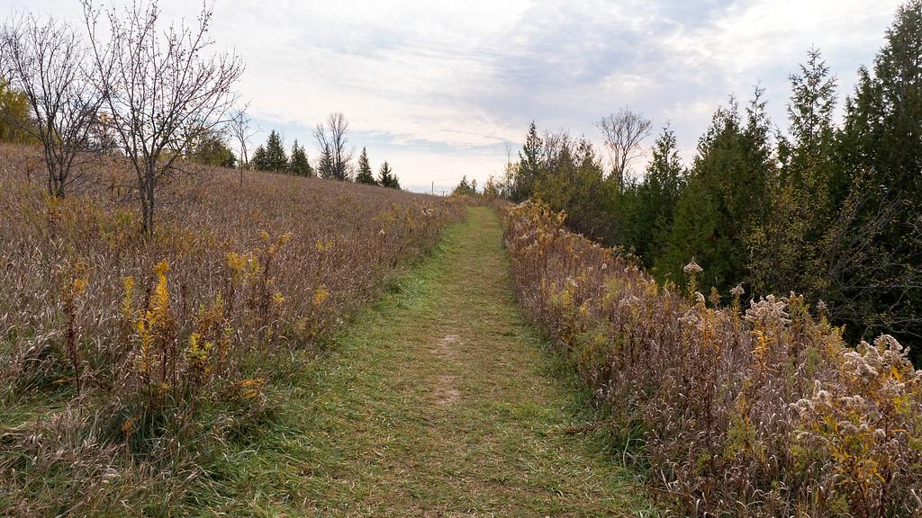 Hiking through the meadows