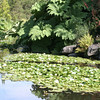 Vandusen Gardens, Vancouver BC