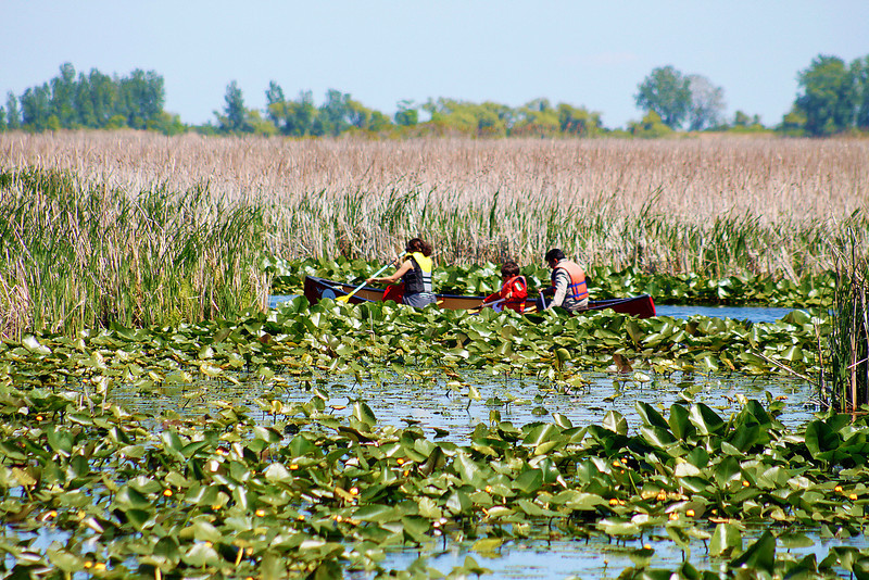 Exploring the marshland by canoe