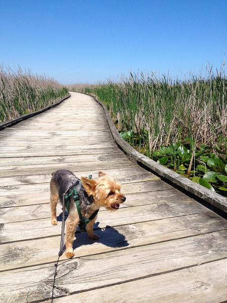 Winston on the Boardwalk