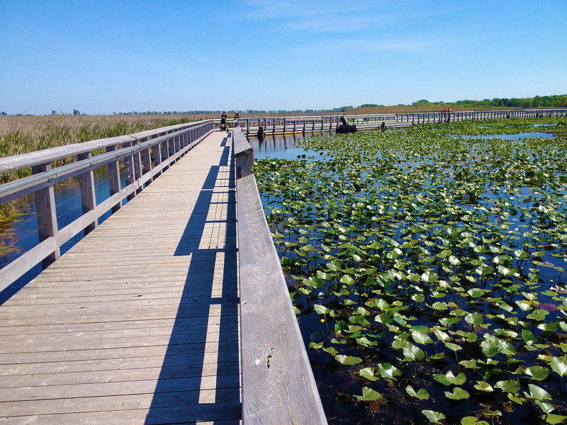 Marsh Boardwalk 1