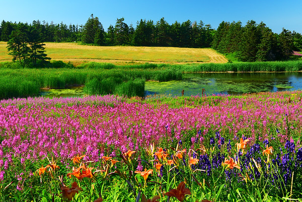 Colorful Priest Pond and flowers
