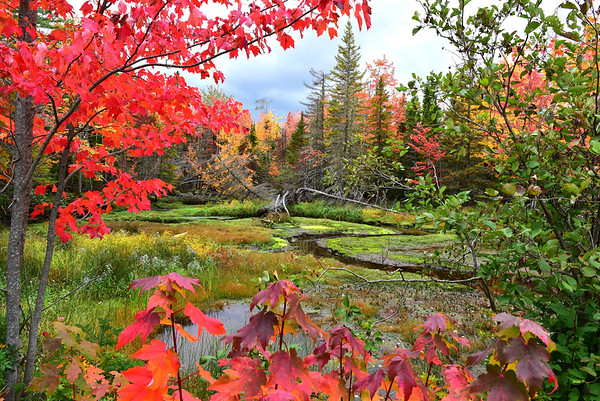 Colorful Marsh in PEI