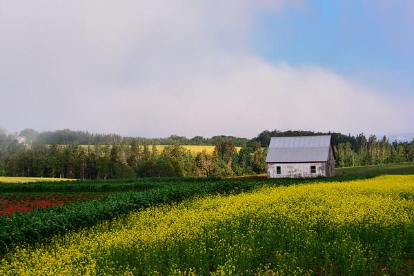 Barn with corn and Canola