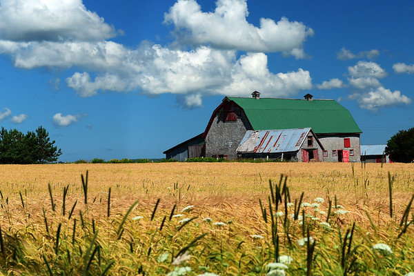 Colorful barn and grass