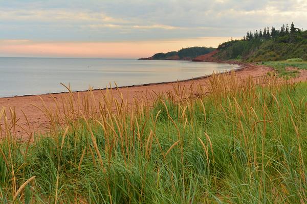 Tall Grass and Beach