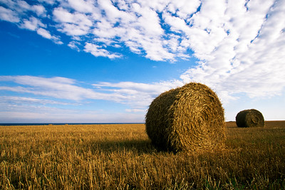 Hay bales near North Cape