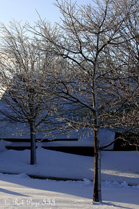 Frozen trees - Quebec City, QC ... December 30, 2009 ... Photo by Rob Page III