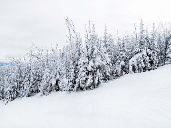 Snow covered trees, Charlevoix, Quebec