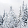 Snow covered trees in Charlevoix, Quebec