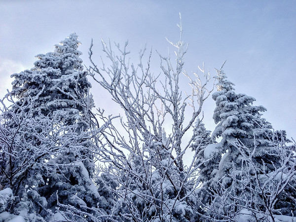 Frost on trees in Charlevoix, Quebec