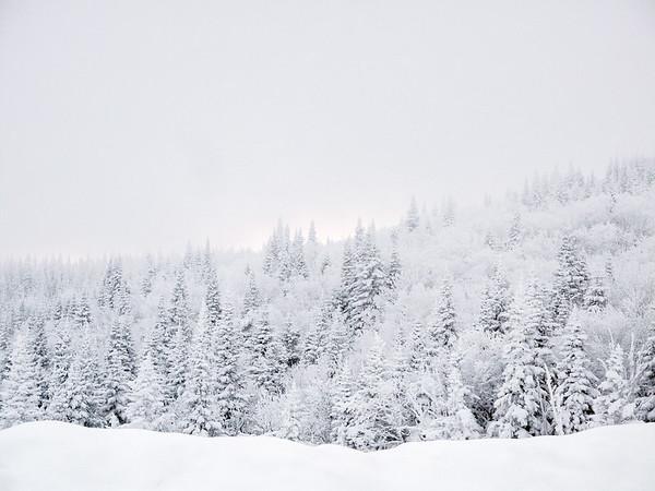 Forest covered of snow in Charlevoix, Quebec / Forêt sous la neige dans Charlevoix, Québec