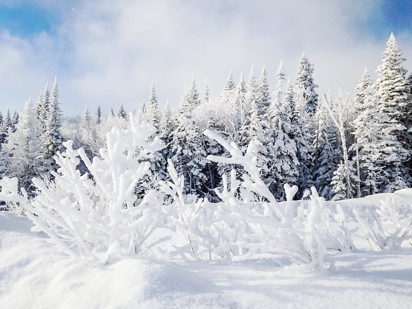 Wintry landscape in Charlevoix