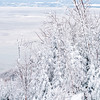 Frosty trees by the Saint Lawrence River