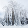 Winter scene in Charlevoix, Quebec