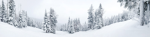 Panorama Photo of a Forest in Charlevoix, Quebec