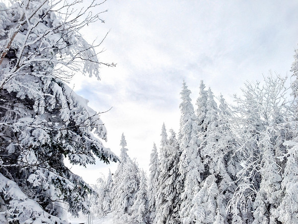 Snow covered trees at Le Massif Ski Resort in Charlevoix, Quebec