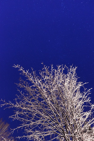 Icy branches and starry sky