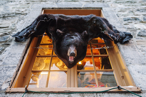 Bear skin in Le Petit-Champlain , Quebec City