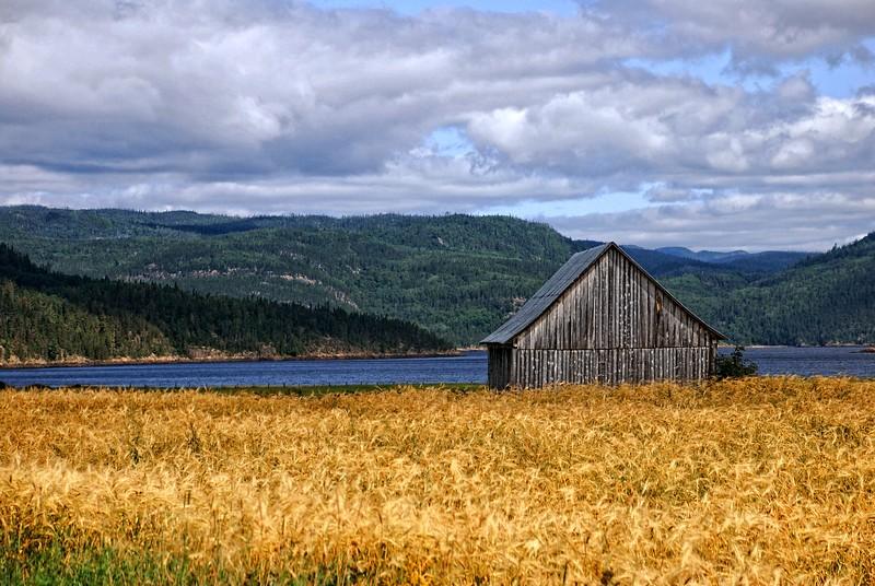 Wheat Field & Old Barn