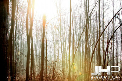 """Forest Fog #2"", Hillsdale, ON, Canada, 2012 Print JP12-320-012"