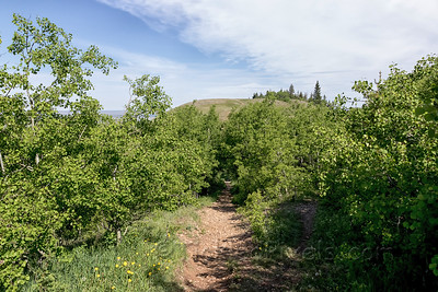 Approaching Bald Butte