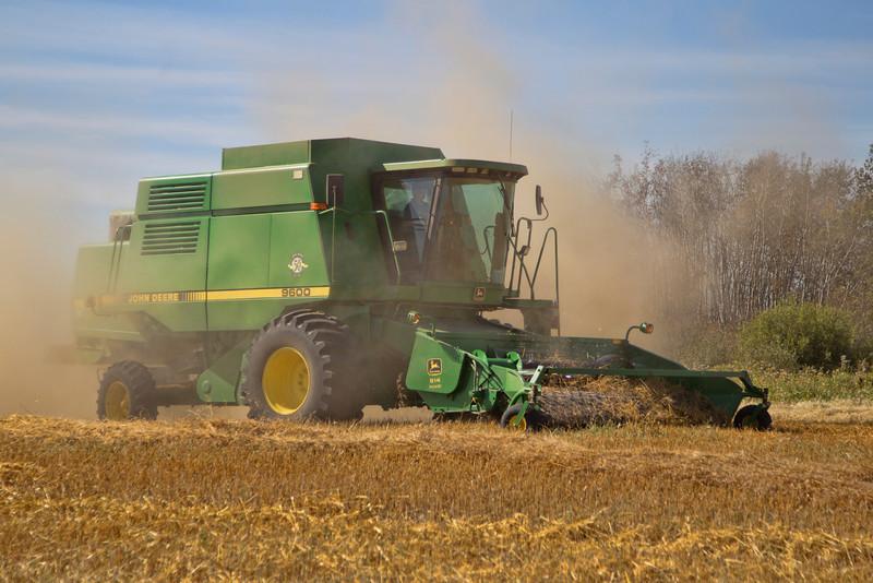 Harvesting Lentils, Stoughton, SK