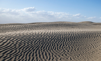 Saskatchewan Sand Dunes, north of The Cyress Hills