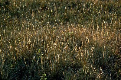 Grasslands National Park - East Block.  Prairie shortgrass