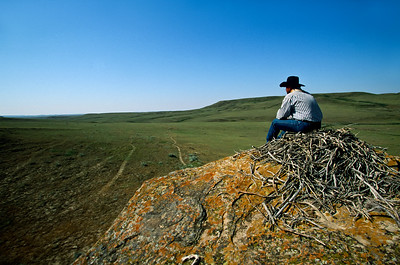 Grasslands National Park - East Block.  A large nest, possibly a Golden Eagle nest, atop a rock overlooking the prairie.