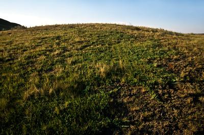Grasslands National Park - East Block.  Creeping Ceder.